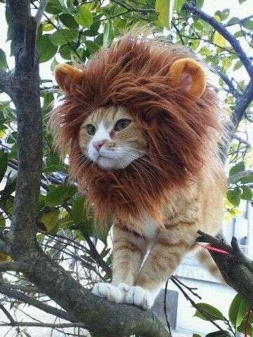ライオンがCATスキャンにかけられる画像がシュール過ぎると話題にwww