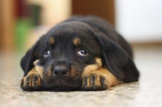 あなたの愛犬どのくらい芸できますか?!