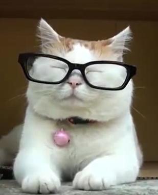 伊達メガネってアリ?ナシ?