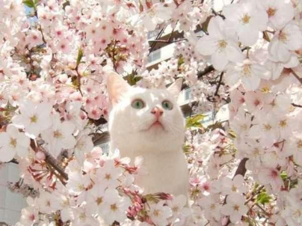 皆で花見しませんか?