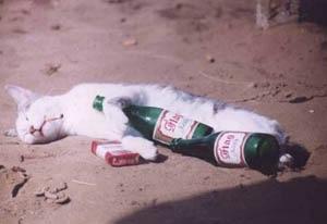人生で一番たくさんお酒を飲んだとき