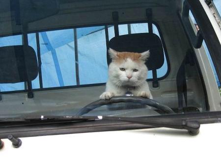 免許を取って初めての運転、どうでしたか?