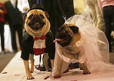 婚活して結婚した人。