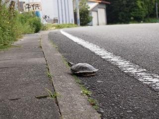 道で見つけた変な物
