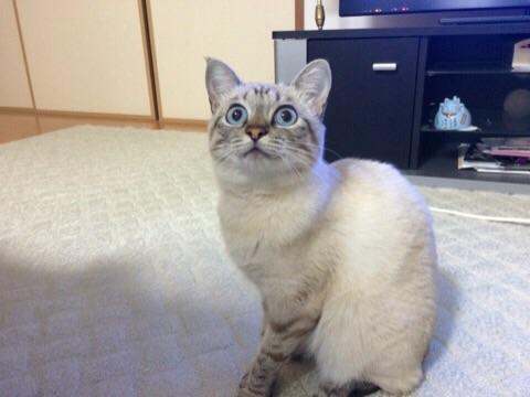 【画像】ネコの顔をしたデコポン 長崎県、島原の畑で見つかる