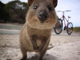 パンダよりかわいいじゃないか。テディベアみたいな新種のウサギ「イリナキウサギ」が20年ぶりに発見される(中国)