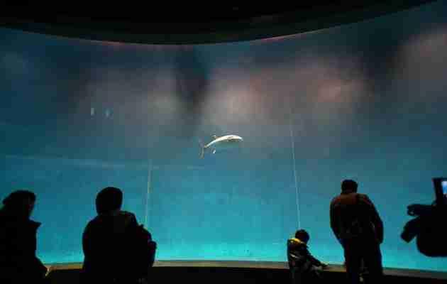 葛西臨海水族園のマグロがついに残り1匹に…原因は未だ解明されず