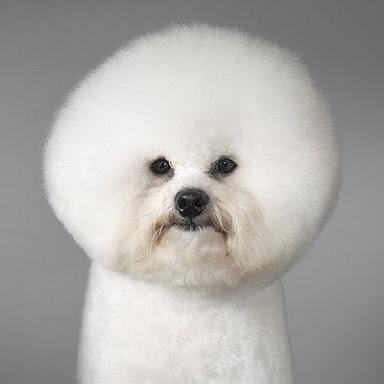 髪の毛が多すぎる人いますか?