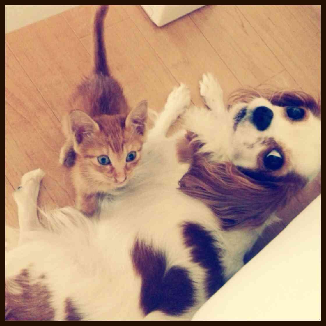 あなたは犬 猫どっち好き