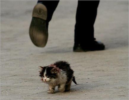 野良or外飼いネコの被害と対策