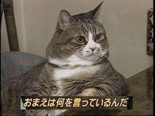 misono ブログでw-inds.ファンからの怒りに反応「自分は、媚びない」