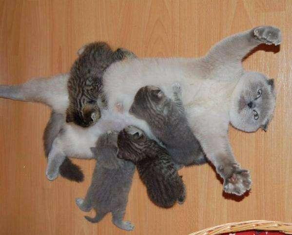 和猫好きさん、好みの柄を語りましょう