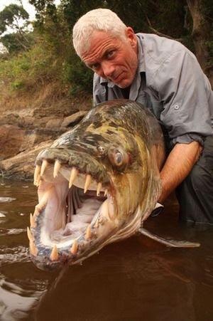 大きな生き物の画像を貼るトピ