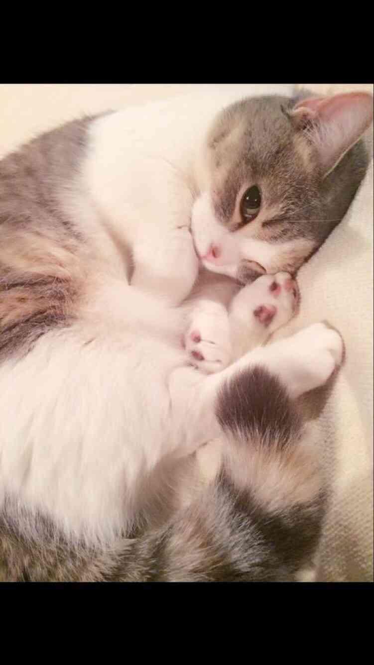 飼い主よりカワイイ?HKT48指原莉乃の猫、キュートな写真の数々に絶賛の声