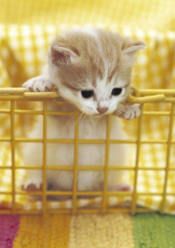 カゴから出たい猫
