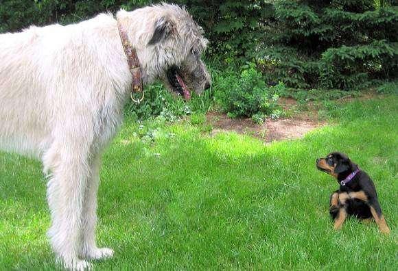 犬好きと猫好きの違い