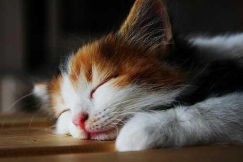 うつ伏せで寝る人は要注意!眼科医が指摘した危険要... うつ伏せで寝る人は要注意!眼科医が指摘し