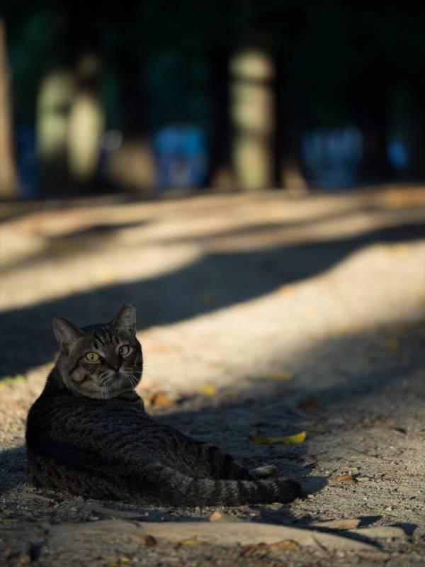 【猫の日】美形ネコ選手権