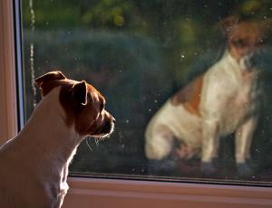 犬の鳴き声でトラブルになったことがある人
