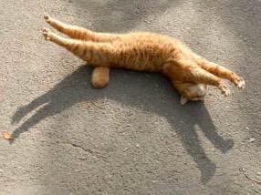 猫の好きな柄