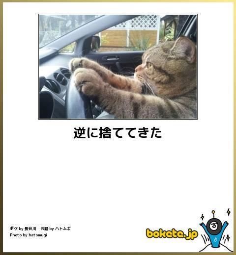 ペット保険について