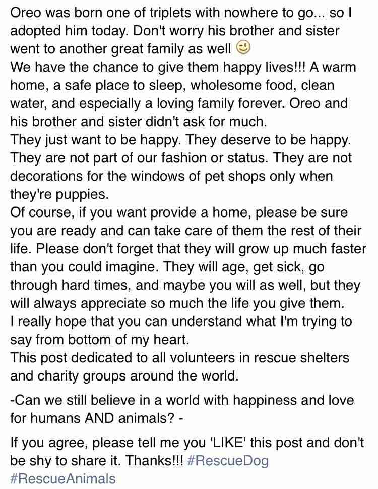 浜崎あゆみ、ペット問題に意見「よく考えて頂きたい、本当に一生一緒に生きて行く覚悟があるのかを」