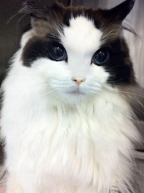 猫って一人暮らしでも飼えるの?オススメの猫教えてくれ。予算は30万 [無断転載禁止]©2ch.net [386178591]YouTube動画>3本 ->画像>69枚