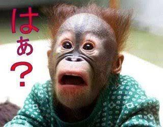 【大相撲春場所】白鵬が4場所ぶり最多36度目V