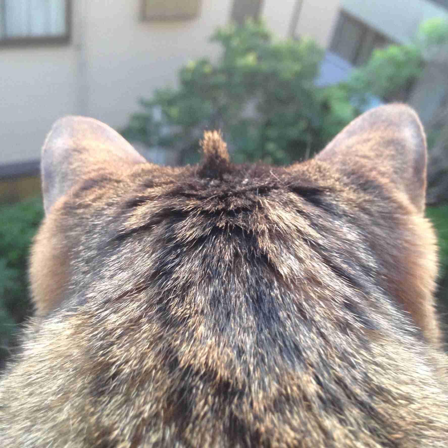 猫の初飼い