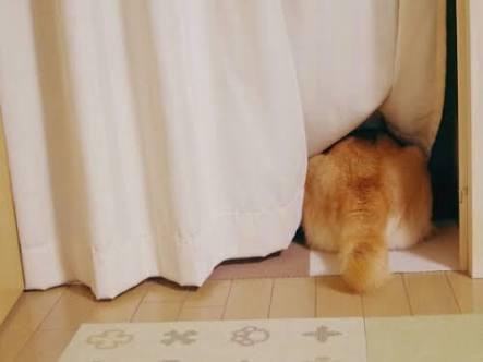 【画像】動物が隠れている画像を下さい