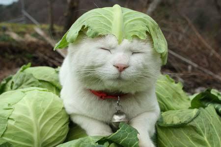 1番たくさん食べている野菜は何ですか。