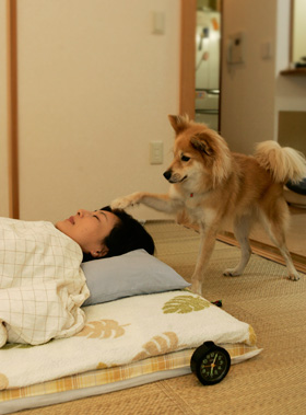 ガルちゃん犬カフェ☆1号店オープンしました♪