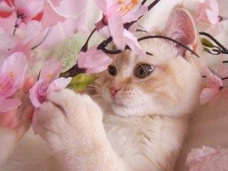 【春なのに】現状をぼやくトピ
