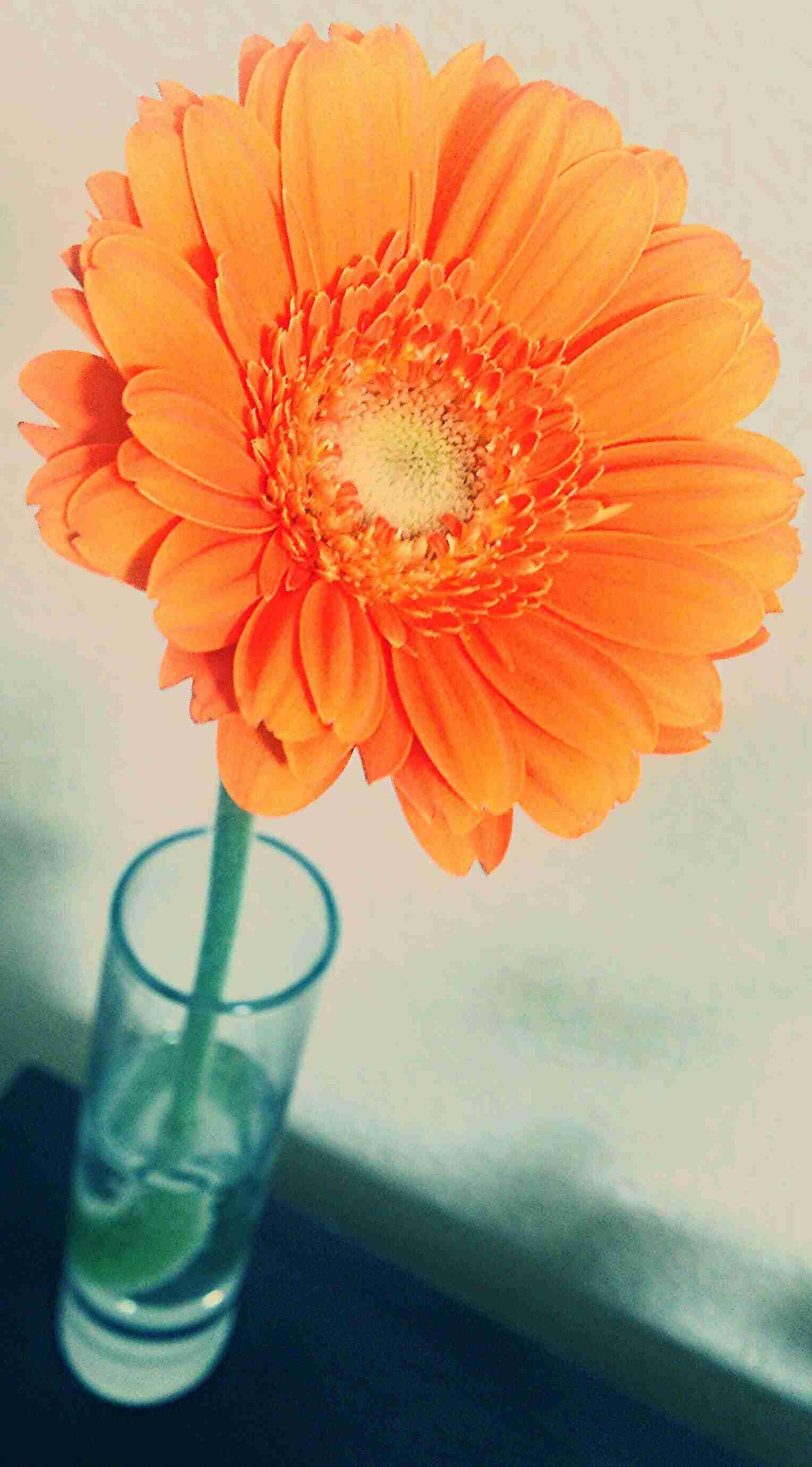 好きな花はなんですか?