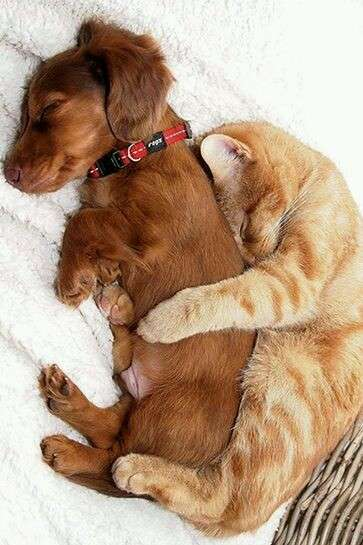 犬と猫って仲良し?それとも?な画像を貼るトピ