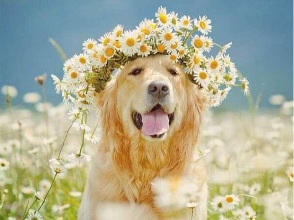 花柄好きな人~