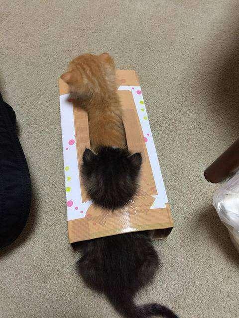 ガルちゃん猫カフェ☆3号店オープンしました♪