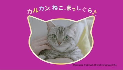 猫のいる生活あるある