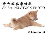好きな芸能人の写真集の表紙を貼るトピ