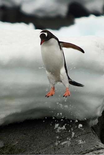 泳いでる動物を貼ろー(・ω・)ノシ