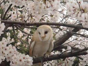 春のアニマルフェア開催