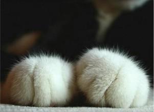 癒される動物の画像が集まるトピ