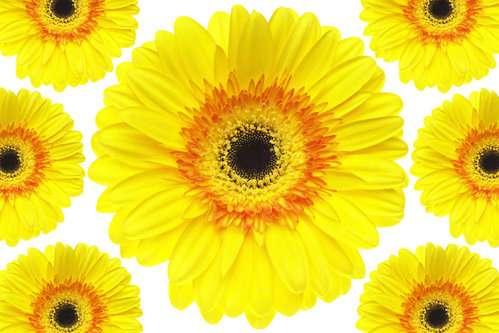 黄色い画像を貼っていこう