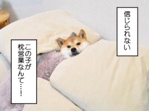 【仮】枕営業できますか?