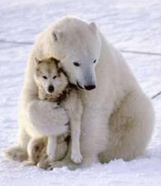 これは何だろう…? 初めて雪を見たシロクマの赤ちゃんの反応がかわいい