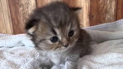 赤ちゃんの動物画像を貼っていく!
