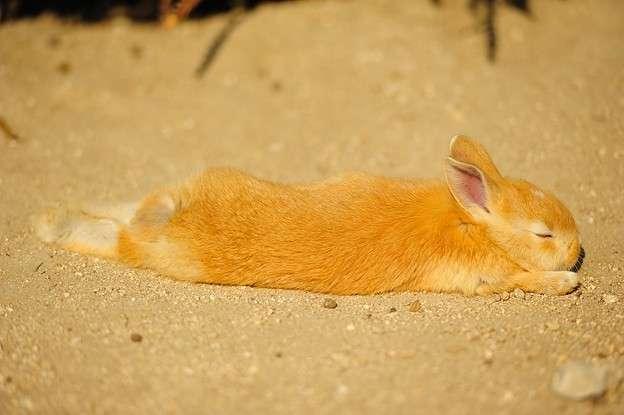 見てるとこっちも眠くなりそう…寝ている動物画像が集まるトピ zzz