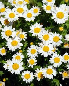 初心者が育てるのにオススメのお花