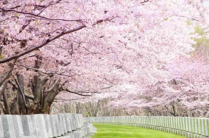 お花見の素敵画像を貼るトピ