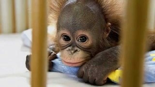 """小森純""""パンパン""""のお腹公開、第2子出産目前の妊娠39週目に撮影"""